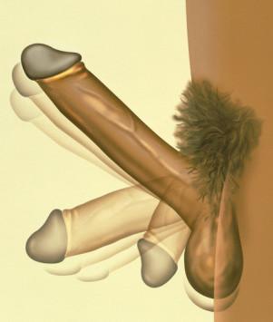 razmer-na-penisa